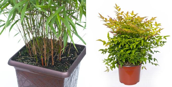 Une Haie De Bambous Sacr S Sur Les Contours De Votre Jardin 01 Blog D Co